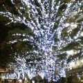 image/sakuragumi-2005-11-19T00:47:13-3.jpg