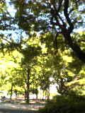 image/sakuragumi-2005-11-23T10:28:44-1.jpg