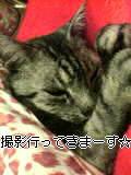 image/sakuragumi-2006-01-28T13:58:13-1.jpg